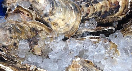 写真:牡蠣